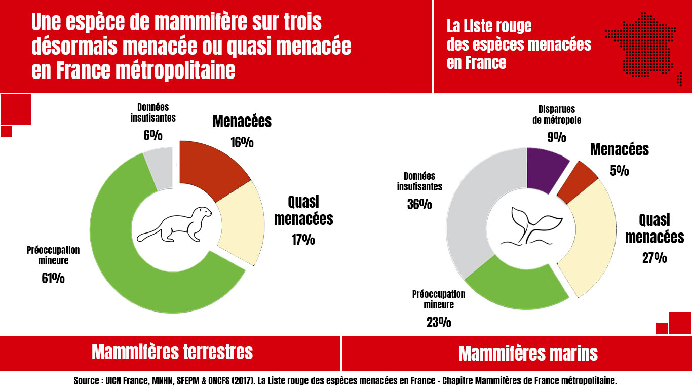 Infographie_resultats_Liste_rouge_mammiferes_de_France_metropolitaine.jpg
